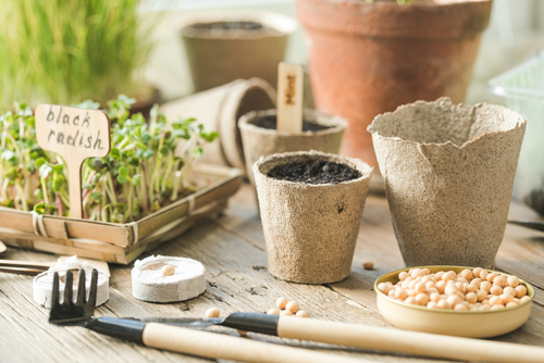 what to do in the garden in February