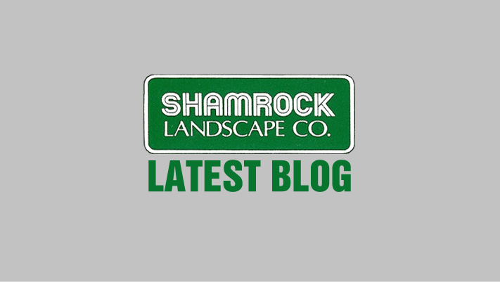 latest blog logo Shamrock landscape Benicia