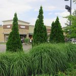 shopping mall landscape maintenance, Shamrock Landscape Co, Benicia CA 94510