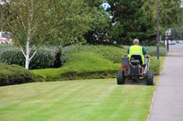 commercial landscape maintenance by Shamrock Landscape Co, Benicia