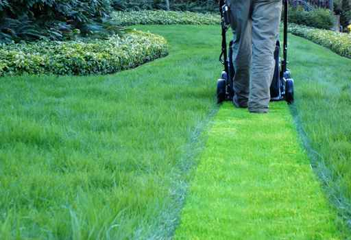 lawn care plan by Shamrock Landscape Co, Benicia, Vallejo, American Canyon