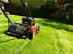 lawn mowing service, Shamrock Landscape, Benicia, Vallejo, American Canyon