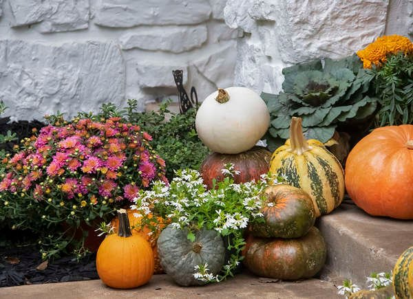 how to spruce up your garden in the fall, Shamrock Landscape, Benicia, CA 94510