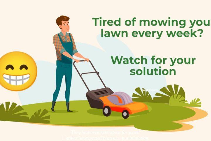 lawn care solution in Benicia