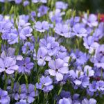 how to create a dream summer garden